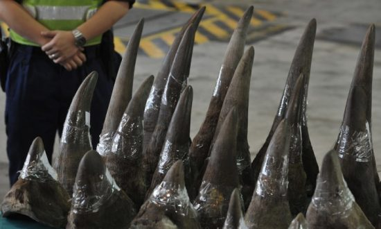 Scientists Call for Legalization of Rhino Horn Trade
