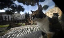 Man Sues Cat Owner Over 'Vicious' Attack