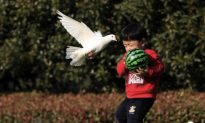 Chinese Boy Develops Bird Flu After Father