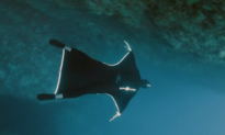 'Fly' Under Water Wetsuit Gives 'Human Flight Experience' (+Video)
