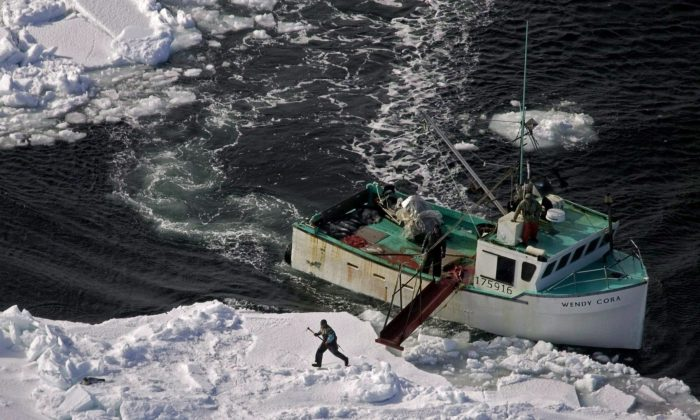 A hunter heads toward a harp seal during the annual seal hunt in the southern Gulf of St. Lawrence in March 2009. Canada's bid to challenge the European Union's ban on seal products through the World Trade Organization is receiving support from a Scottish business hurt by the ban. (THE CANADIAN PRESS/Andrew Vaughan)