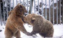 Alaska Man Fights Off Bear, Saves Family