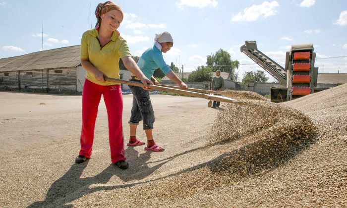 Women sweep grain near the village of Zhovtneve, Ukraine on Aug. 11, 2009. Many Ukrainian farmers do not have access to large retail networks, but farming cooperatives are increasingly providing support. (Genya Savilov/AFP/Getty Images)