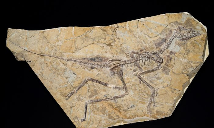 World's First Bird May Have Roamed Jurassic Period