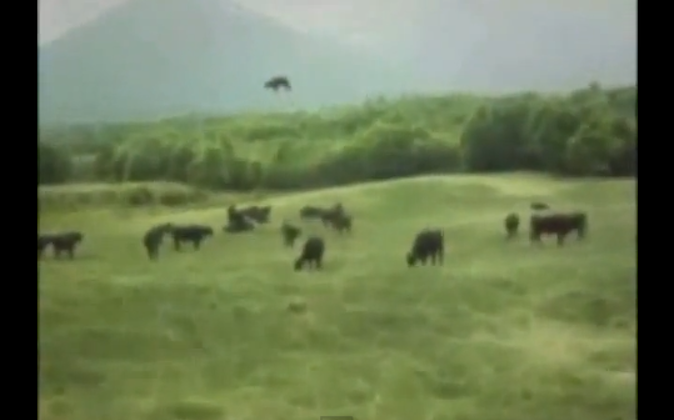 Screen capture of a video from 1983 showing a cow in the distance slowly raising up in the air and then disappearing into a circular cloud. Supporters of the video say that a farmer from Argentina would not know much about video editing and also how the cow shifts its weight in air is very genuine. Critics of the video say that the farmer was bankrupt and was after money. See video below.