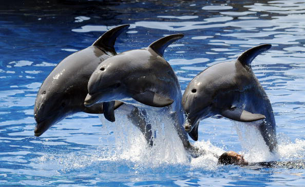 India Calls Dolphins 'Non-Human Persons', Bans In-Captivity Shows » The Epoch Times