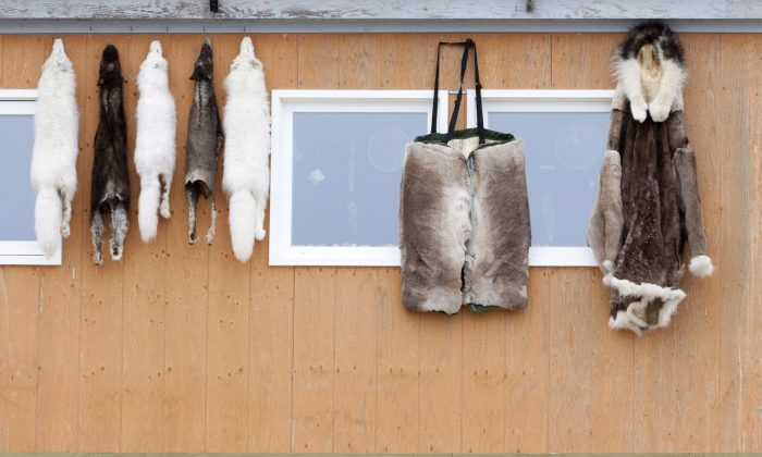 Furs and animal pelts hang on the outside a building in Cambridge Bay, Nunavut. People in Kugluktuk are locking up gas containers in tough wooden boxes to keep them away from young people bent on inhaling fumes to get high. (THE CANADIAN PRESS/Adrian Wyld)