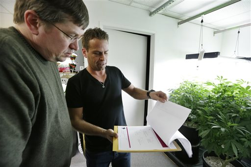"""Mike Steenhout, left, comptroller of Washington's Liquor Control Board, goes over detailed information about marijuana """"mother"""" plants in front of him with Brent Miller as they tour Miller's marijuana growing facility in Seattle. Spreadsheets, statistics and bean-counting are Steenhout's regular realm of expertise. Now, he's a weed guy. Washington's vote last fall to legalize marijuana for adults over 21 and set up a system of state-licensed pot growers, processors and retail stores left dozens of Liquor Control Board employees in the position of having to research and help regulate a substance that many knew little to nothing about. While the state has hired a Massachusetts firm to serve as its official marijuana consultant, the Liquor Control Board is also doing its own work--a cannabis crash-course. (AP Photo/Elaine Thompson)"""