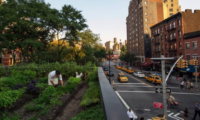 The rooftop farm at Rosemary's, a new Italian restaurant in Greenwich Village. (Courtesy of Rosemary's)