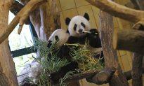 Austria Threatened With Panda Loss for Meeting Dalai Lama