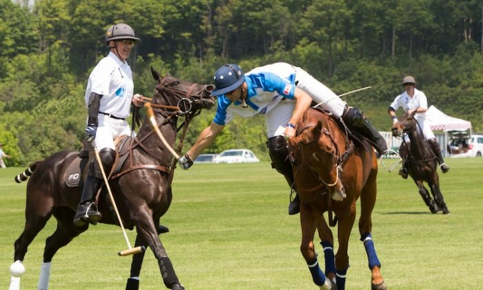 Polo match at the Toronto Polo Club's 2013 Polo For Heart fundraiser. (Evan Ning/The Epoch Times)