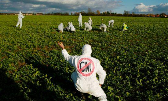 EU at a GMO Crossroads