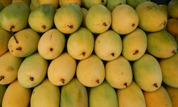 Mango Fun: With the arrival of summers, the king of fruits, makes its way in the market with a bang. Apart from its mouth-watering taste, the fruit is known to be a powerhouse of nutrition. (Ramon FVelasquez/Wikimedia Commons)