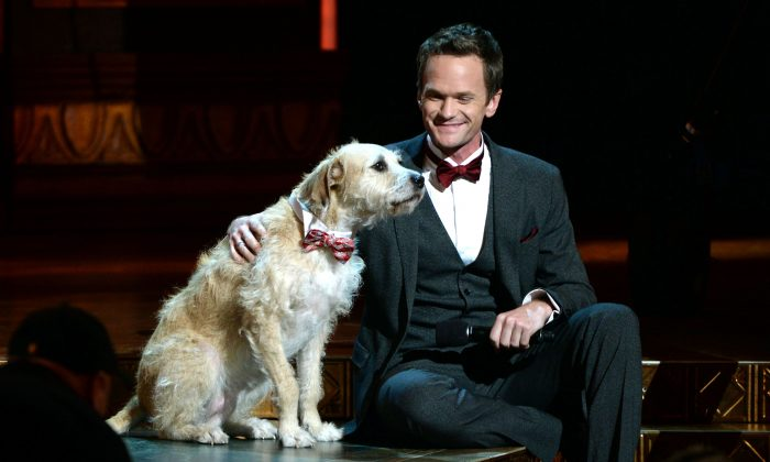"""Host Neil Patrick Harris onstage with the canine star of """"Annie"""" at The 67th Annual Tony Awards at Radio City Music Hall in New York City on June 9, 2013. (Andrew H. Walker/Getty Images for Tony Awards Productions)"""
