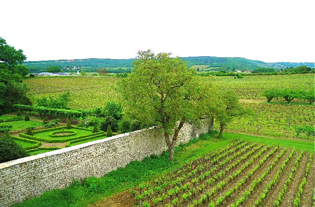 The Vineyards at Chateau de Chamirey in the town of Mercurey in the Burgundy Province of France. (Susan James)