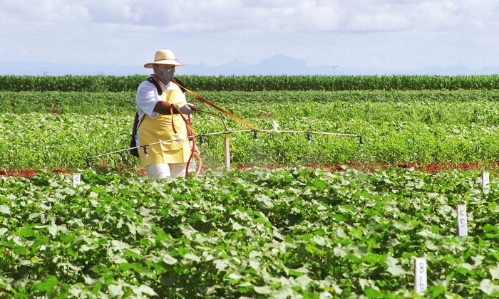 A farmer sprays a transgenic soybean plantation in Mato Grosso do Sul, central Brazil in 2004. Agribusiness consultancy agency Céleres reports that 88.8 percent of soybeans grown in Brazil, many of which are exported around the world, are genetically modified--though the use of GMOs in Brazil is not without critics. (Monalisa Lins/AFP/Getty Images)