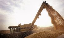 GMOs, A Global Debate: US Leads in GMO Production
