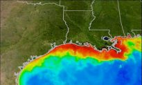 Record Dead Zone Forecast for Gulf of Mexico