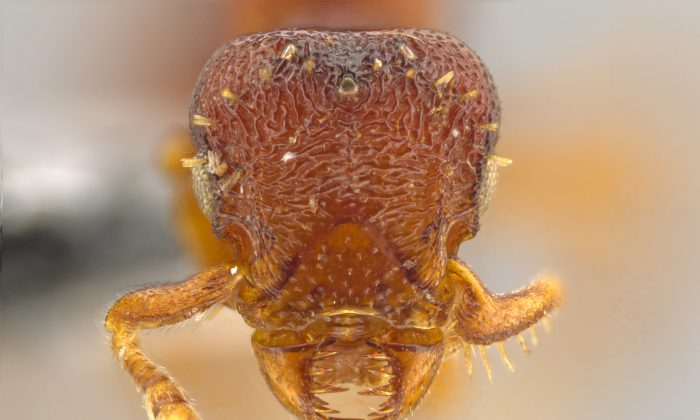 New Ant Species 'Horrifying' With 'Fierce Jaws' and 'Sharp Teeth' (+Photos)