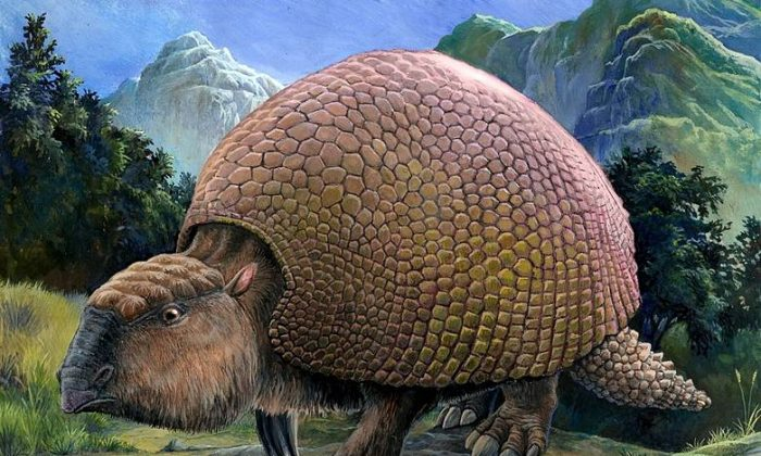 A rendering showing a Glyptodon, an armadillo-like creature that once lived in America. (Pavel Riha)