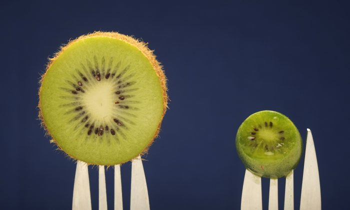 Farmers in France are developing a mini-kiwi, shown here with a full-size kiwi, in Labatut,  southwestern France, on Oct. 4, 2010. JEAN-PIERRE MULLER/AFP/Getty Images)