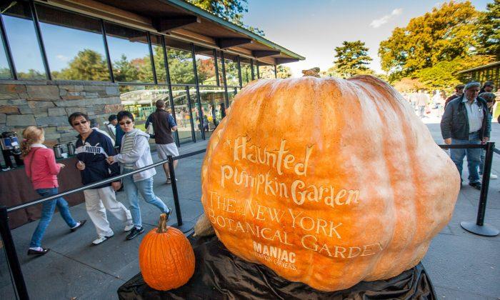 The third biggest pumpkin 2013 welcomes visitors of New York Botanical Garden, Bronx, New York, Oct. 20, 2013. (Petr Svab/Epoch Times)