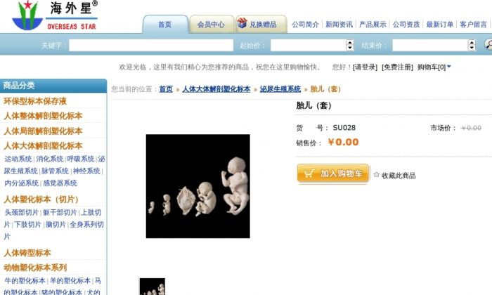 A screenshot from the website of the Beijing Overseas Star Science & Technology Development Co. shows a variety of plastinated fetus specimens for order. Chen Guoxin, director of the firm, said that the specimens may not be sold, but recipients are expected to make a donation of $10,000 to his company afterwards. (Screenshot/Epoch Times)