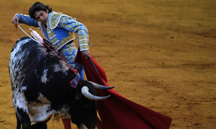 French matador Sebastian Castella performs a pass on a bull during a bullfight at the Maestranza bullring in Sevilla on Sept. 28, 2013. A debate has opened up in Spain about whether children should view bullfights on television, according to an Oct. 9, 2013 article in The Local. (Cristina Quicler/AFP/Getty Images)