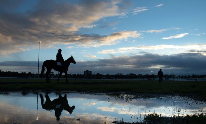 "General view of horses during trackwork at Flemington Racecourse in Melbourne. Trainers work hard but ""not everyone has good horses"", says trainer Simon Zahra. (Vince Caligiuri/Getty Images)"