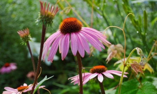 5 Native American Herbs for the Cold and Flu Season