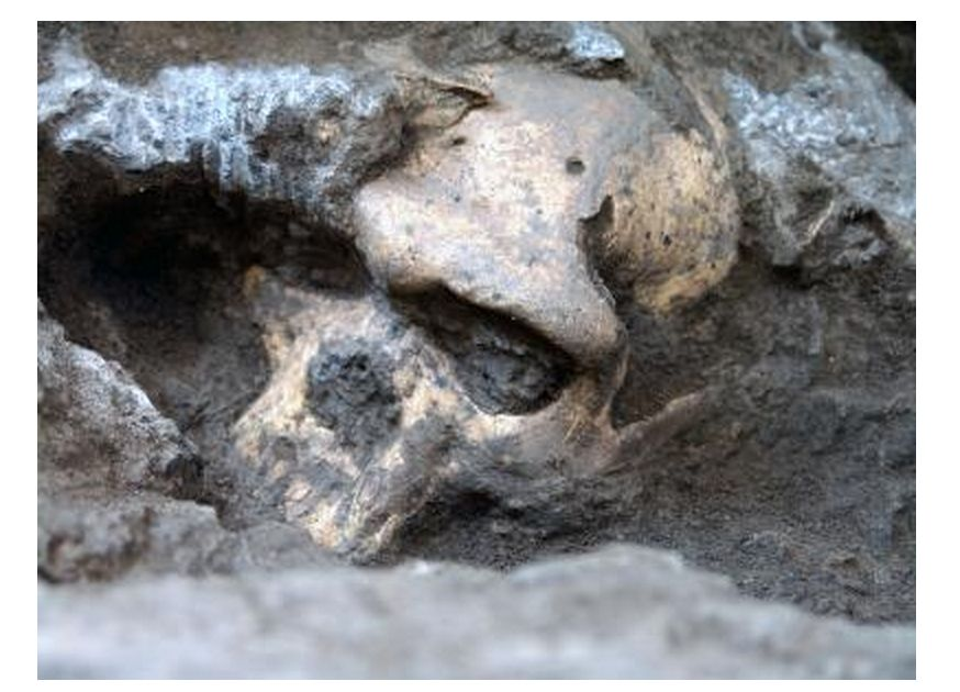 'Skull 5' Suggests Significant Change to Human Lineage