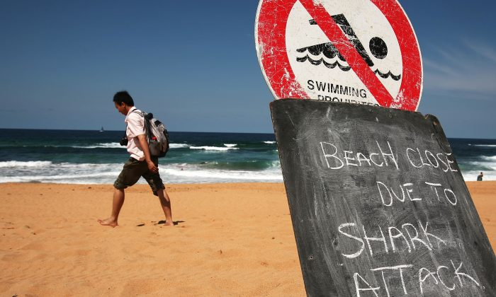A man walks on the closed beach after a shark attack on a surfer in 2009 in Sydney, Australia. The government is working to reduce the number of attacks by setting traps to kill the sharks farther away from shore. (Ian Waldie/Getty Images)