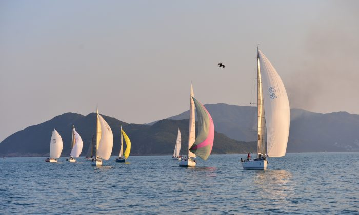 'Lighthorse' line honours winner in Race-6 of the Hebe Haven Winter Saturday Series leads a string of boats home in the evening sunshine on Saturday Nov 30, 2013. (Bill Cox/Epoch Times)