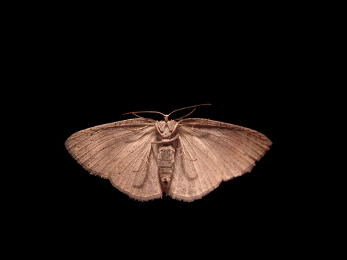 History's Creatures: Sighting the Mothman