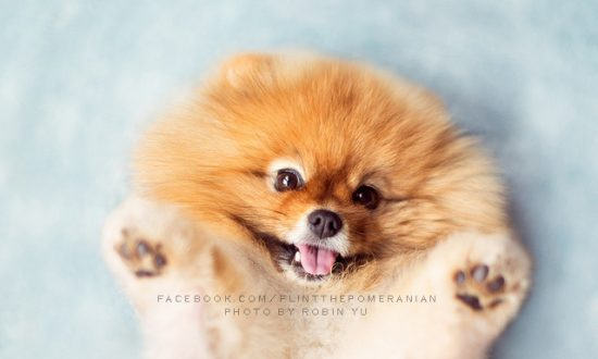 It's Like All the Cute in the World Crammed Into One Little Dog (+Photos +Video)