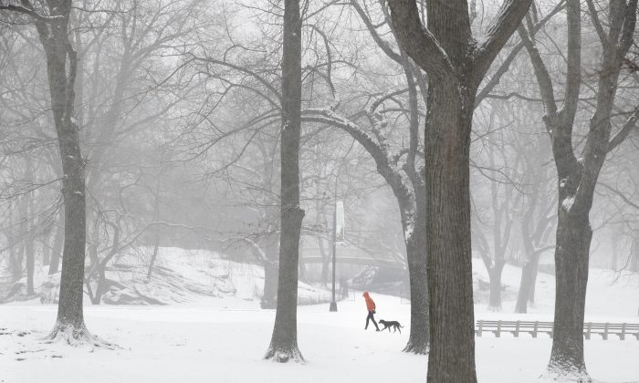 A person walks a dog through snowy Central Park in the Manhattan borough of New York on Tuesday, Jan. 21, 2014. (Seth Wenig/AP)