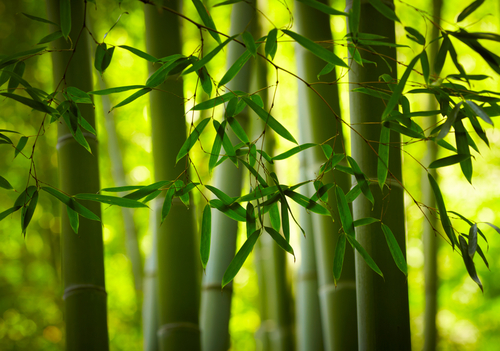 No Such Thing as Organic Bamboo Clothing