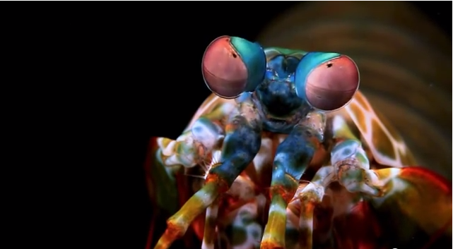 I Always Thought of Shrimp as Seafood, but After Seeing This Video...I Think I Have a New Favorite Animal