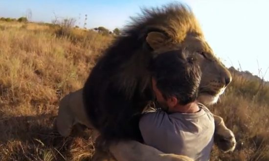 Watch 'Lion Whisperer' Kevin Richardson Cuddle with Lions, Hyenas (+Video)