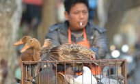 Bird Flu Spreads Rapidly in China This Year