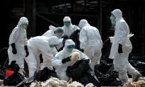 Fast-Spreading Bird Flu Causes Panic in China