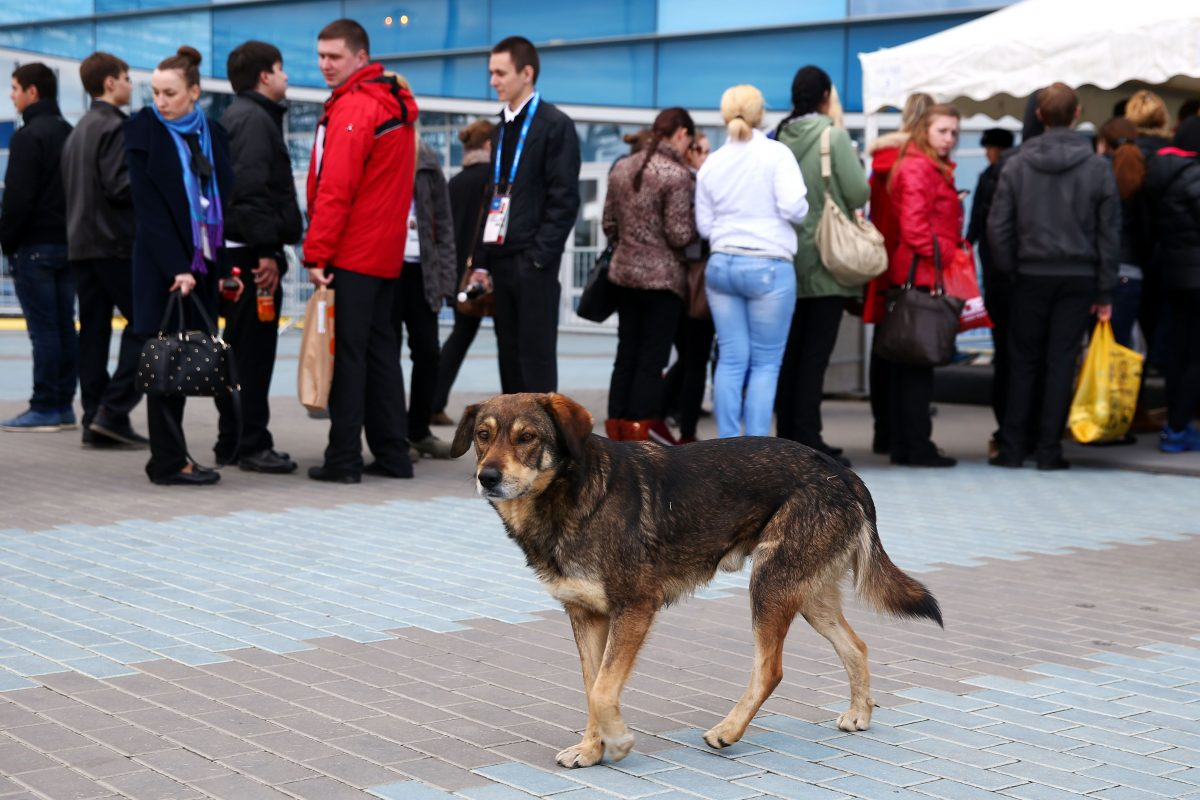 Is Canada A Haven For The World S Stray Dogs Sochi