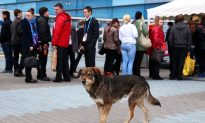 Is Canada a Haven for the World's Stray Dogs?
