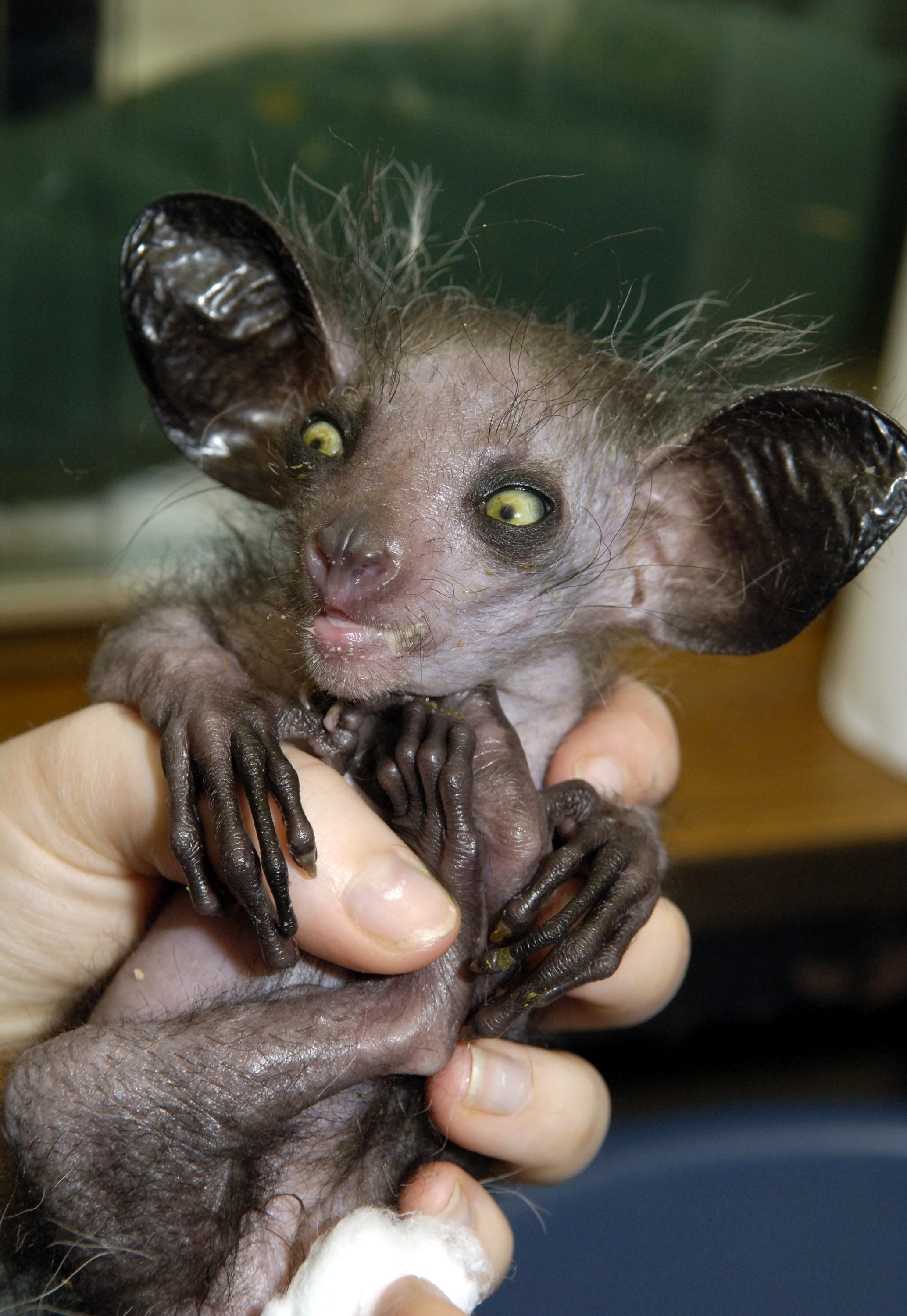 Top 20 Ugliest Animals in the World