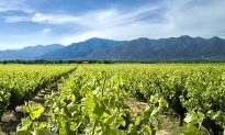 The Sweet Wines of Roussillon Stand Out