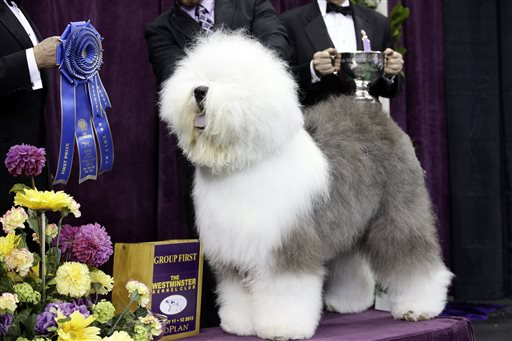 Tv Airing Of Westminster Dog Show