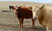 Chinese Meat Importers Race to Order US Beef