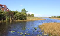 Gators and Birds in Florida's River of Grass: Touring the Everglades