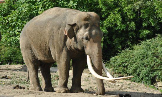 Calm Man Unfazed by Charging Elephant