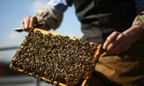 Force Pesticide Makers to Release Bee Death Studies, Health Canada Told